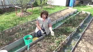 КЛУБНИКА.  Хотите много вкусных ягод?Тогда вперед,на грядки)))Весенняя обработка земляники садовой.