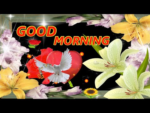 Morning Song Video, Letest Lovely Sayri Song, Video Watsup Message.