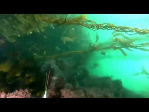 Big Sur Spearfishing Trip
