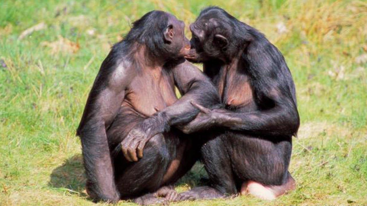 Weird animals mating