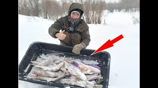 ЩУКИ СОШЛИ С УМА НАЛОВИЛИ КОРЫТО ЩУК Зимняя рыбалка на жерлицы Вот это улов Река Лозьва