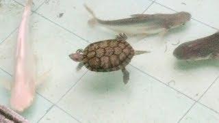 tallfishermanj