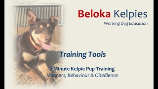 Training Tools  2 MIN Kelpie Pup Training