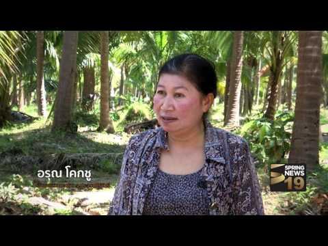 ย้อนหลัง ไขปมข่าว 11/3/60 : วิกฤตมะพร้าวไทย (3/3)