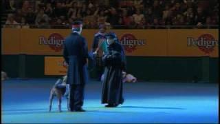 Vulnerable Breeds Parade 2008 - Irish Terrier