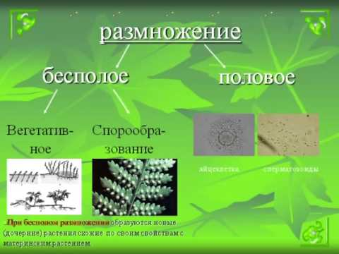 Размножение и оплодотворение у растений.AVI