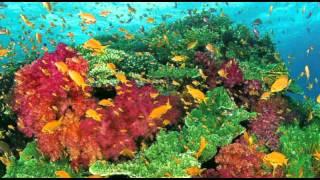 珊瑚海 (Coral Sea) - 周杰伦/梁心颐 (Jay Chou, Lara) cover