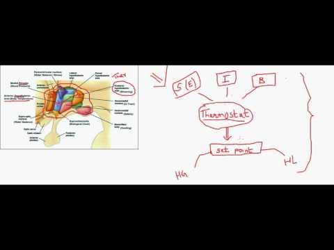 Thermoregulation .. (hypothalamic regulatory centers )