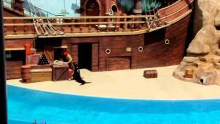 Clyde and Seamore take Pirate Island (SeaWorld Orlando)