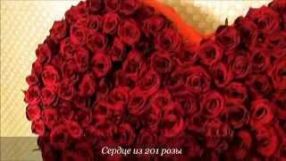 Сердце из 201 розы. Доставка цветов Астана.(, 2014-12-05T16:41:26.000Z)
