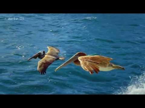 Dokumentation - Die fantastische Reise der Vögel HD