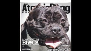 AMERICAN BULLY ENTERVIEW BULLYHOLICS EDER FLORES BET ON BLACK