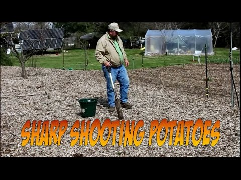 Sharp Shooting Potatoes Back To Eden Garden Youtube