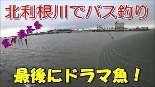 北利根川(霞ヶ浦水系)でバス釣り!最後にドラマ魚が!