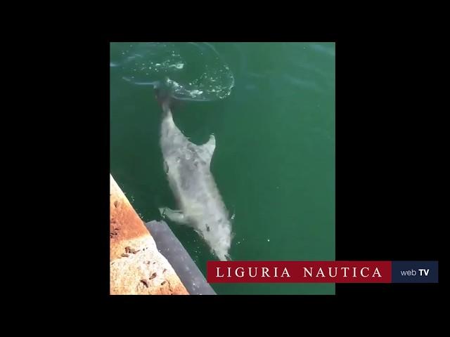 I delfini nel porto di Cagliari