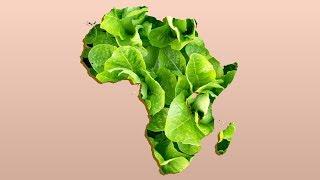 ♫ Number 15 Burger King Foot Lettuce ♫