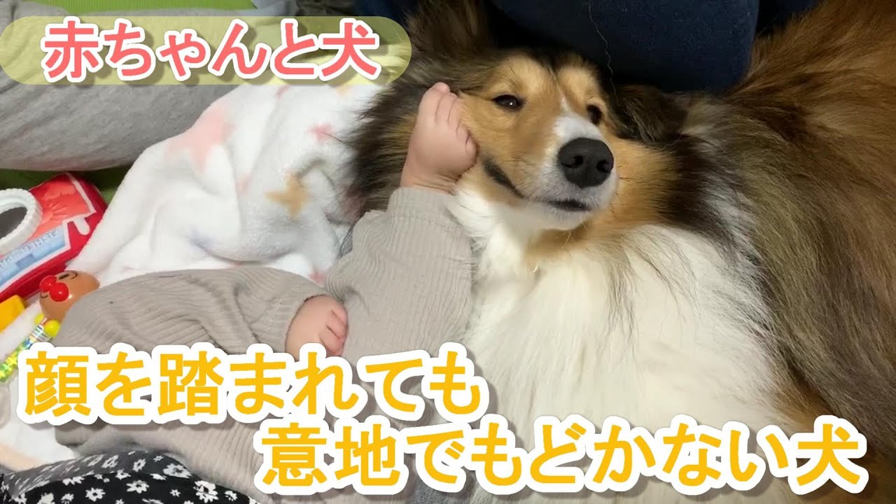 で 犬 寝る 足元