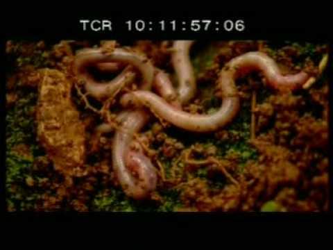 Soil Biotechnology (SBT) - Mimicking Nature