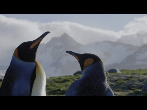 A Voyage of Discovery: Antarctica, South Georgia & Falkland Islands