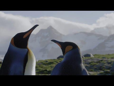 A Voyage of Discovery: Falkland Islands, South Georgia & Antarctic Peninsula