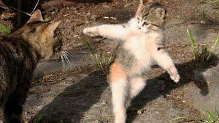 Приколы С Животными! Смешные кошки и котята! Смешные видео приколы про кошек!