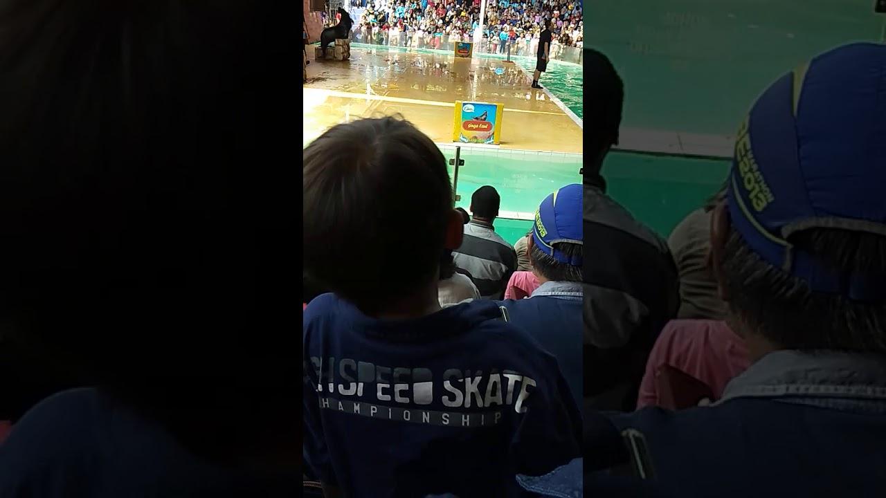 Anjing laut - YouTube