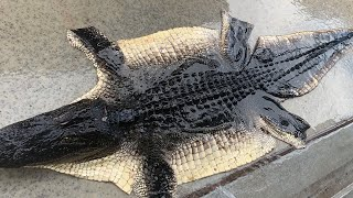 How To Skin And De-Bone An Alligator {Ready For Tanning}
