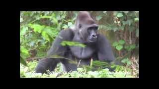 Schmutzer Primate Center - Jakarta - Indonesia