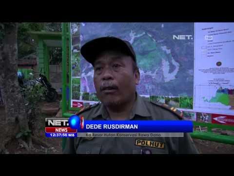 BKSDA Banten Lepas Ratusan Burung Asal Sumatera ke Alam Bebas -NET12