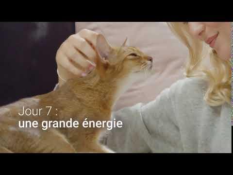 PURINA ONE® - Le Programme 21 Jours – Jour 7 : Une Grande Energie – 12s