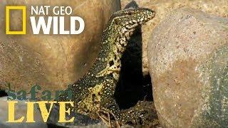 Safari Live - Day 86 | Nat Geo WILD