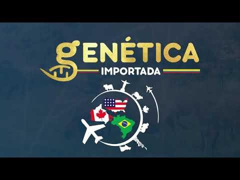REMATE GENETICA IMPORTADA
