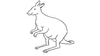 How to Draw a Kangaroo / Как нарисовать Кенгуру