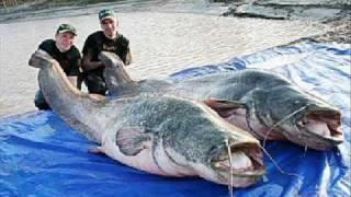 Worlds largest fish (World Record) - die größten Fische - music: Oxygene - The Ocean