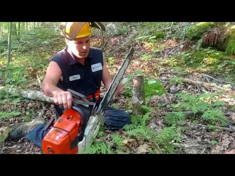 File sharpening a saw in the woods