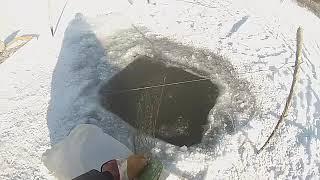 Рыбалка Ставим и проверяем сети зимой На судака