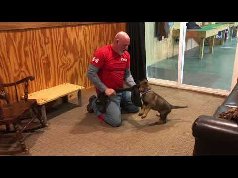 """Protection Training Evaluation """"Odin"""" 8 Wks Early Work For Personal Protection"""