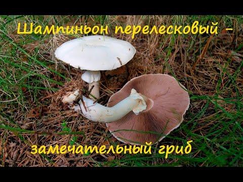Лесные грибы,Названия,Фото,Описание,Отравления