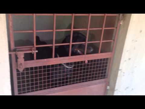 Royal Breeders Bangalore - Dog Kennels
