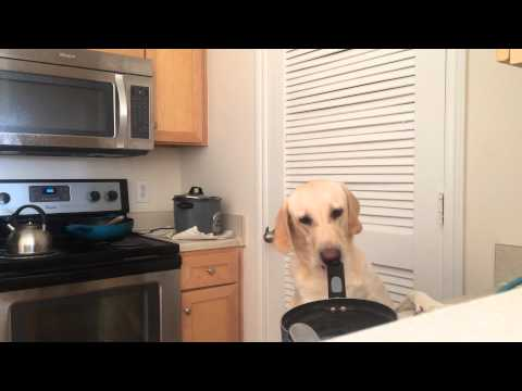 Dog Steals Food Like An FBI Agent, and Knows Double Check.