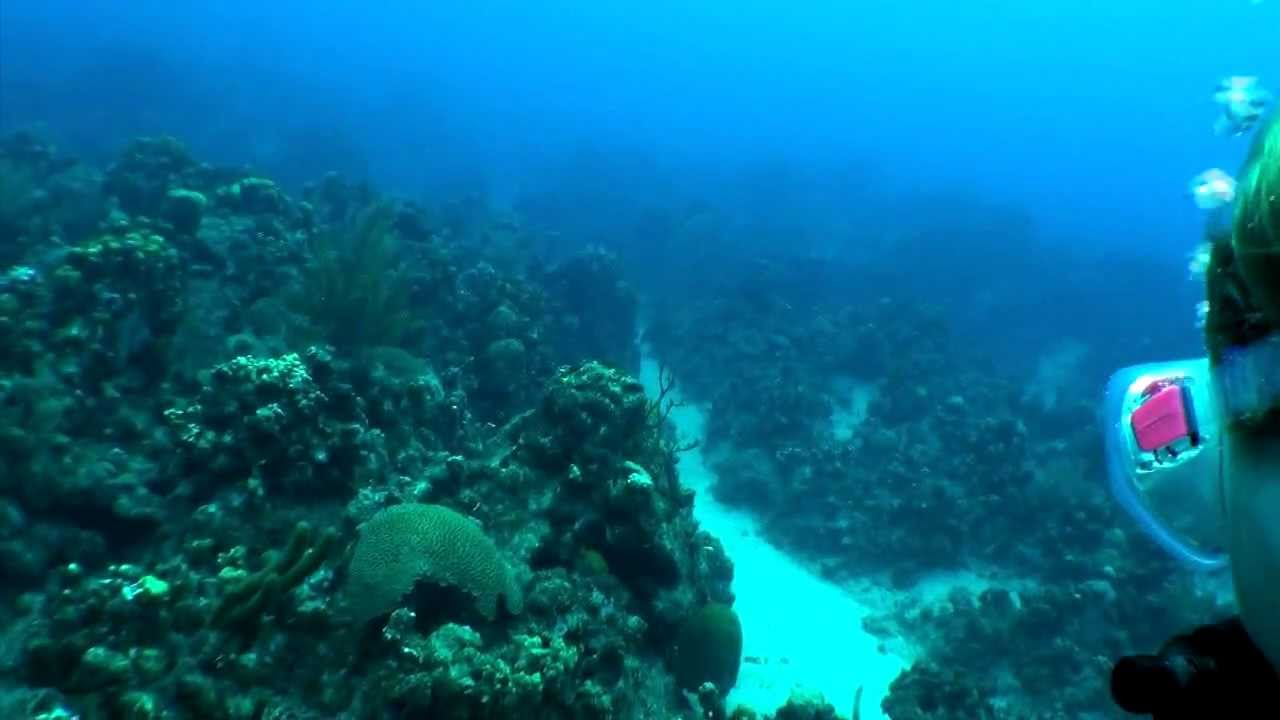Grand Cayman Sunset House Shore Dive