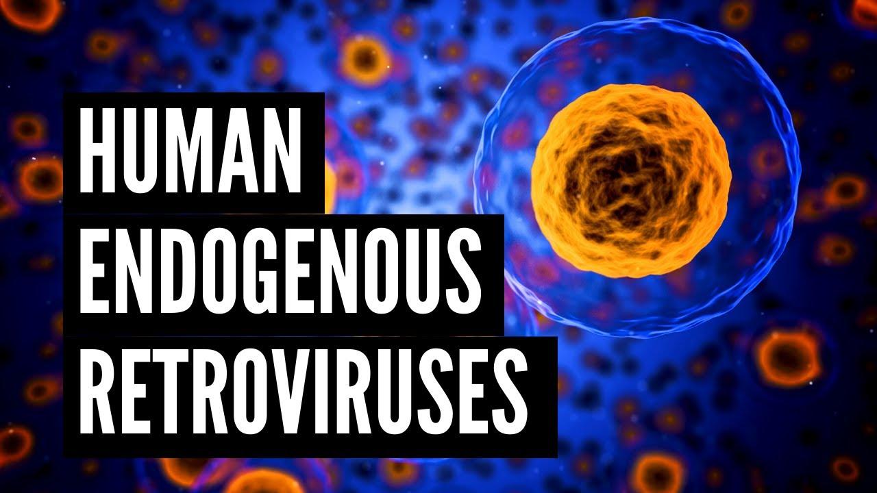 Download Human Endogenous Retroviruses (HERVs)