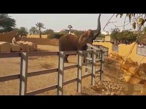 زيارة حديقة حيوان الرياض 2016  | Riyadh Zoo
