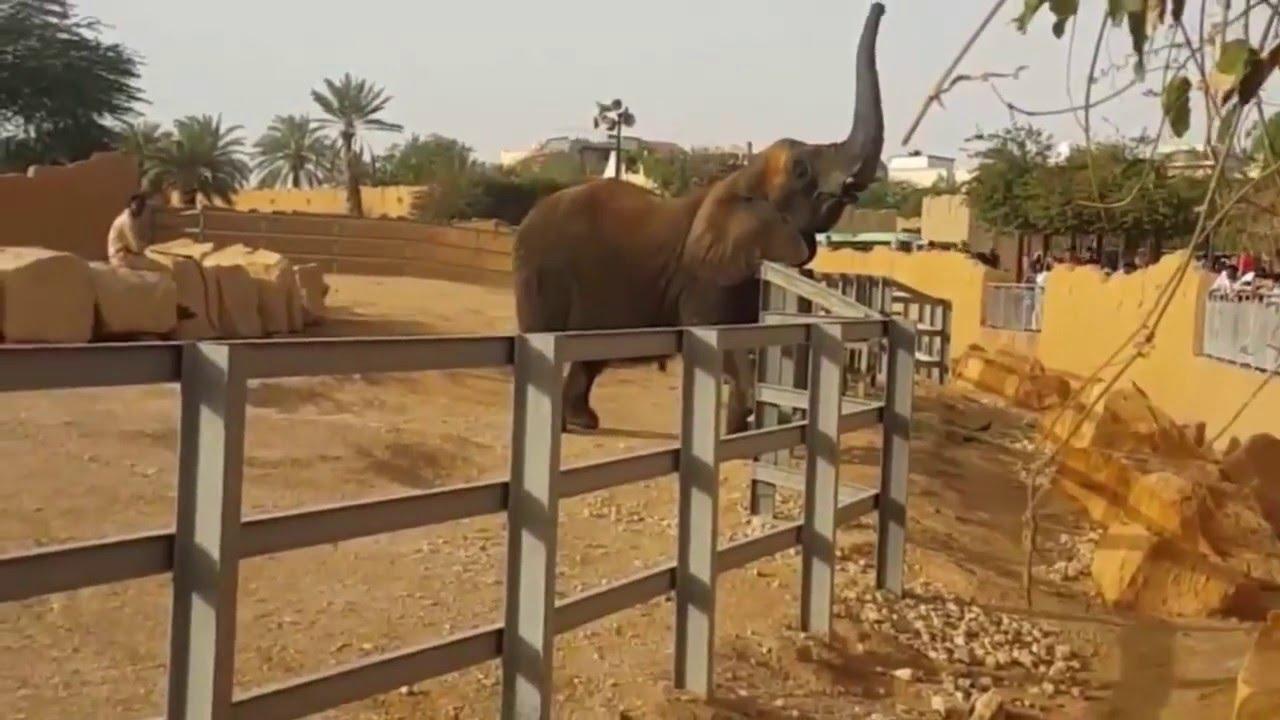 زيارة حديقة حيوان الرياض 2016 | Riyadh Zoo - YouTube