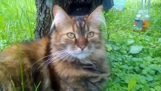 страшнее кошки зверя нет, а лень сытой кошки - ее вторая натура