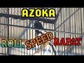 Kacer  Azoka  Tampil Roll Speed Rapat Tidak Terbendung Di Event Anniversary Ke  Bnr Kobra Magelang  Mp3 - Mp4 Download