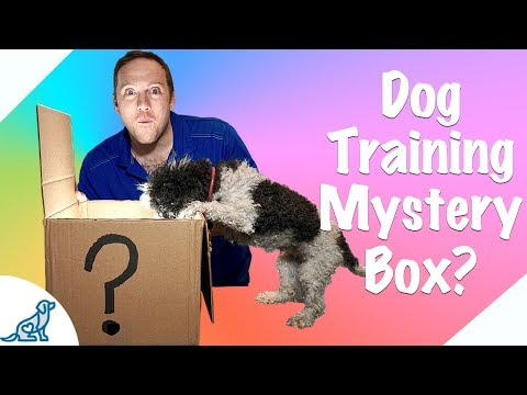 Online Dog Training For Free! - Professional Dog Training Tips
