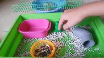 Lót chuồng cát bi cho hamster[Miko và Mika cực thích luôn á nha]