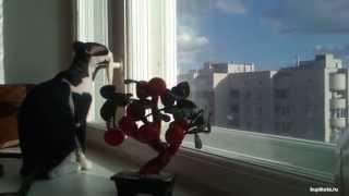 Украинский Левкой - порода кошек.