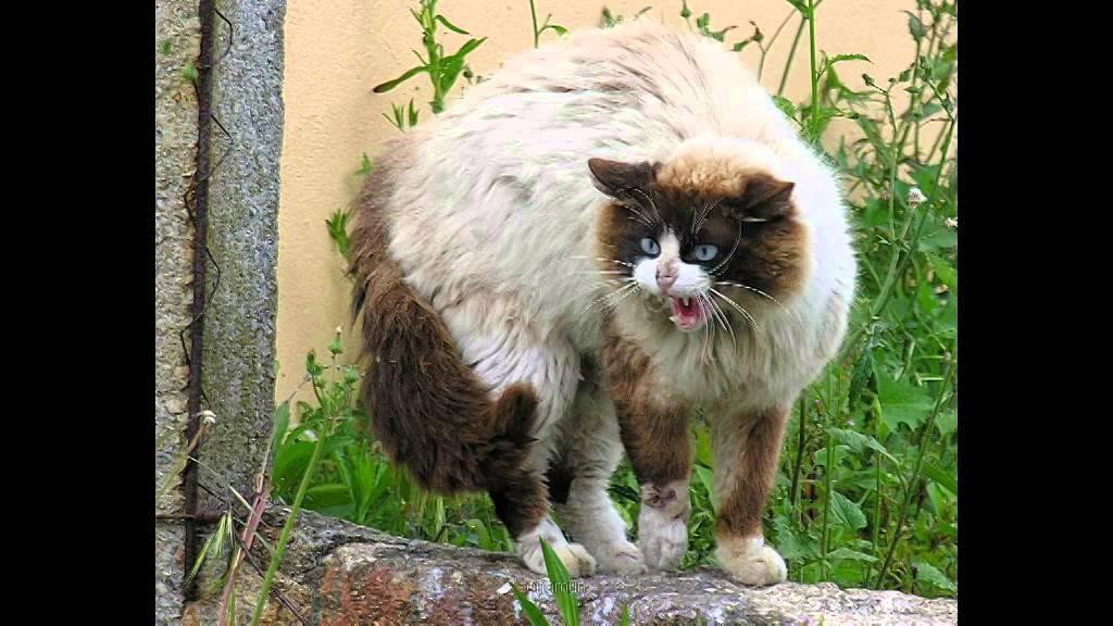 que significa so241ar con gatos negros blancos d233biles gatos